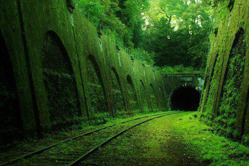 Railroad with plants on it.