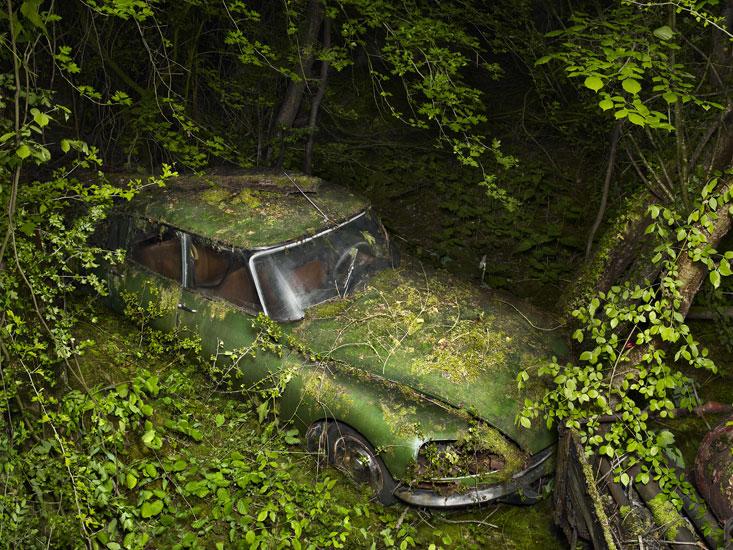 Plants eating car.