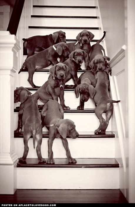 All the puppies on stairs.