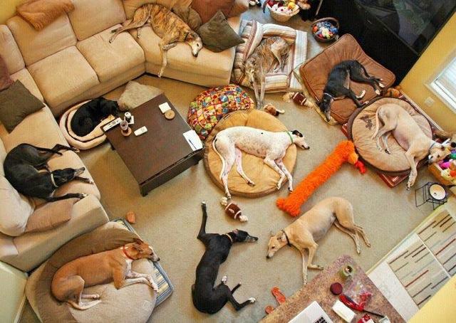 Greyhound Jonestown.