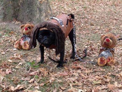 Win Halloween with a Pug
