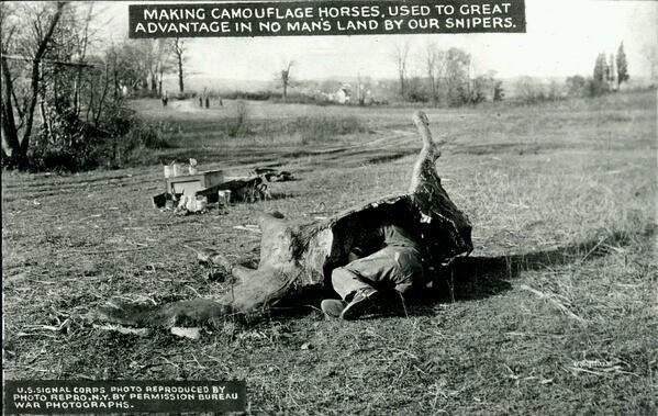 Cow Sniper.